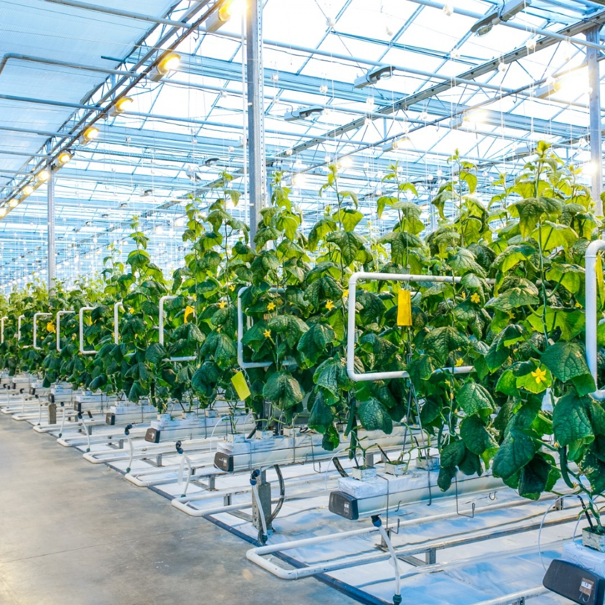 Sterke schakel in de agri- & foodketen: het succesverhaal van Certhon Greenhouse Solutions